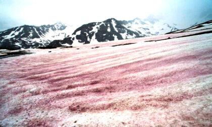"""L'incredibile spettacolo della """"neve anguria"""" sulle Alpi: LE FOTO"""
