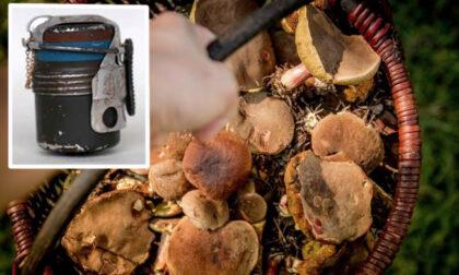 Va a funghi e porta a casa nel cestino una bomba della Seconda Guerra Mondiale