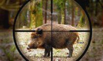 Cacciatore spara a un cinghiale, ma lo manca: l'animale lo carica e lo uccide