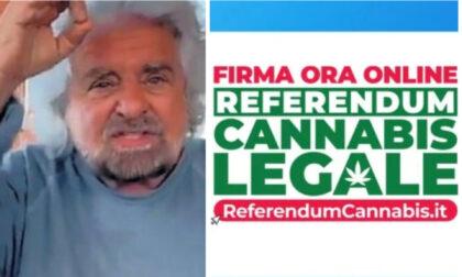 """Referendum cannabis: anche Beppe Grillo dice """"sì"""" alla legalizzazione"""
