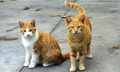 Lesignano, il paese dove spariscono... i gatti