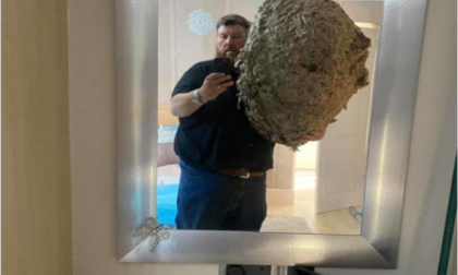 Trova in soffitta un nido gigante che ospita centomila vespe