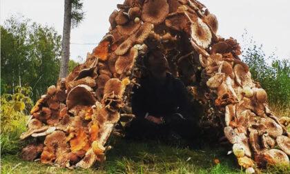 Una capanna di funghi di stagione: da far diventar matti gli appassionati...