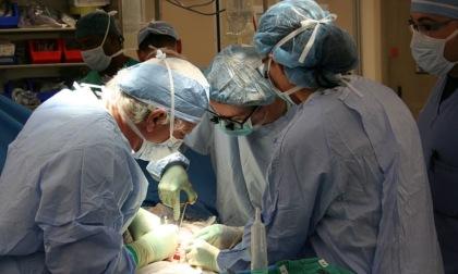 Trapiantato per la prima volta un rene di maiale in un essere umano
